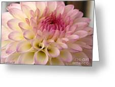 Dahlia Named Brian's Dream Greeting Card