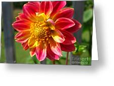 Dahlia Named Brian's Sun Greeting Card