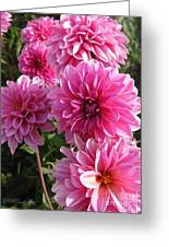 Dahlia Named Lucky Number Greeting Card