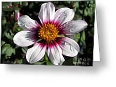 Dahlia Named Mii Tai Greeting Card