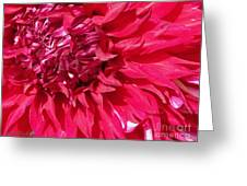 Dahlia Named Mingus Erik Greeting Card