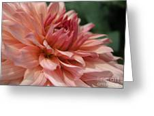 Dahlia Named Preference Greeting Card