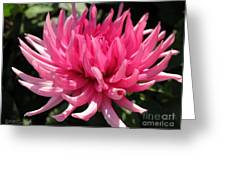 Dahlia Named Pretty In Pink Greeting Card
