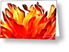 Dahlia On Fire Greeting Card