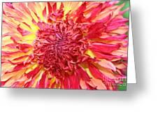 Dahlia Pom Greeting Card