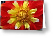 Dahlia Pooh Greeting Card