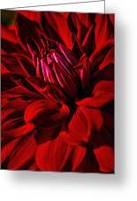 Dahlia Red Greeting Card