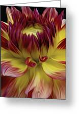 Dahlia Red Yellow Greeting Card