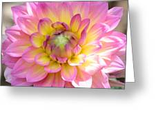Dahlia Speak To Me In Pink Greeting Card