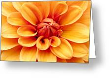 Dahlia Squared Greeting Card