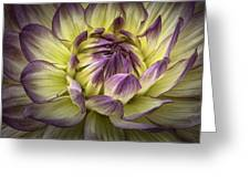 Dahlia Greeting Card
