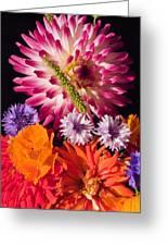 Dahlia Zinnia Bachelor's Buttons Flowers Greeting Card