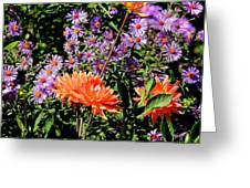 Dahlias And Asters Greeting Card