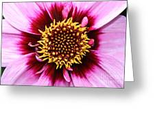 Dahlia's Golden Crown Greeting Card
