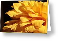 Dahlia's Light Side Greeting Card
