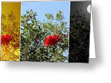 Daily Cycle - Triptych Greeting Card