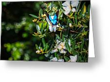 Daintree Monarch Butterfly Greeting Card