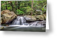 Daintree Rainforest Greeting Card