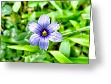 Dainty Blue Greeting Card