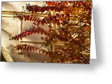 Dainty Branches - Warm Autumn Colors - Washington D C Facades Greeting Card