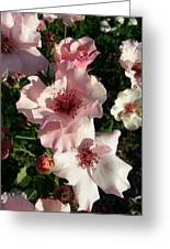 Dainty Roses 2 Greeting Card