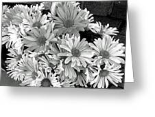Daises In Black And White Greeting Card