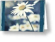 Daisies ... Again - 146a Greeting Card