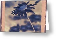 Daisies ... Again - 150ab Greeting Card