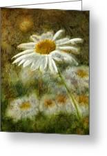 Daisies ... Again - P11at01 Greeting Card