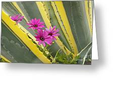 Daisies And Cactus Greeting Card