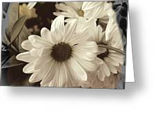 Daisies And Charcoal Greeting Card