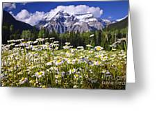Daisies At Mount Robson Greeting Card by Elena Elisseeva