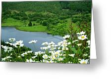 White Daisies At Queens View Greeting Card