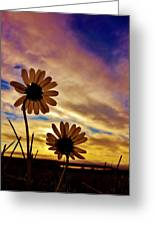 Daisies At Sundown  Greeting Card