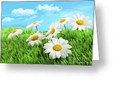 Daisies In Grass Against A Blue Sky Greeting Card