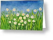 Daisies In The Spring Greeting Card