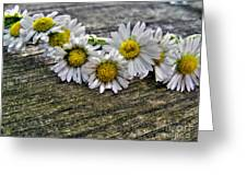 Daisies In Wreath Greeting Card