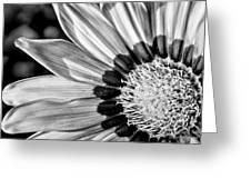 Daisy - Bw Greeting Card