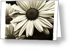 Daisy 1 Greeting Card by Tanya Jacobson-Smith