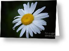 Daisy 14-3 Greeting Card