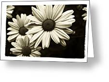 Daisy 2 Greeting Card by Tanya Jacobson-Smith