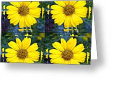 Daisy 8 Greeting Card