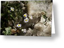 Daisy And Dandelion Greeting Card by John Holloway
