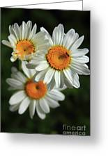 Daisy And Friend Greeting Card