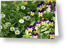 Daisy And Pansy Mix Greeting Card