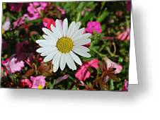 Daisy And Pink Flowers Greeting Card