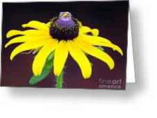 Daisy And The Blue Bug Greeting Card