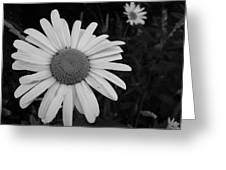 Daisy At Night Greeting Card
