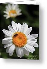 Daisy Bee Nice Greeting Card