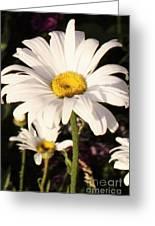 Daisy Close Up Greeting Card